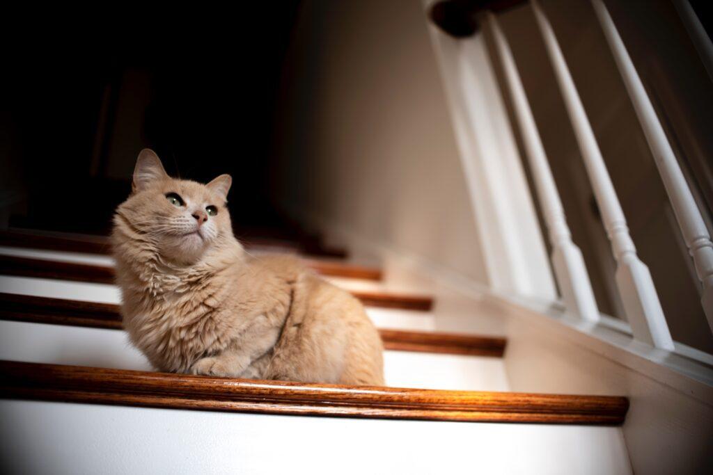 Katt i trapp